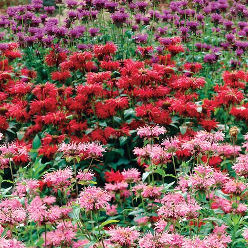 Shade perennials archives michigan bulb blog michigan for Low maintenance perennials for shade