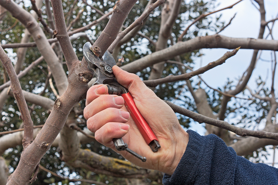 bigstock-Pruning-Tree-49489457