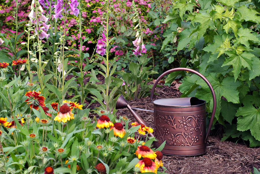 Bronze metal watering can in flower garden.  Shallow dof with fo