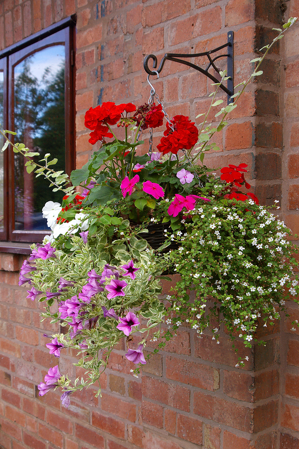 hanging basket on wall