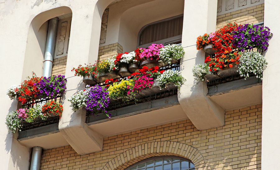 Multi-colored Flowers On Balcony